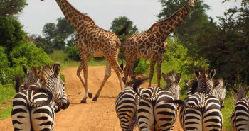 טיול לטנזניה – חוויה של פעם בחיים